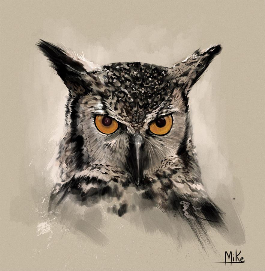 Owl by Mikecardoso