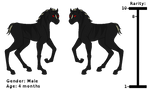 Adoptable Black Unicorn Foal !~{Closed}~!