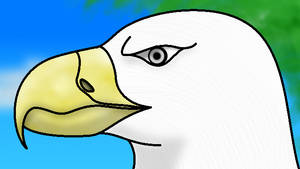 How I draw an Eagle (request) 2 - download by horse14t