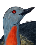 How I Draw A: Red-throated Loon (request)