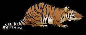 Commish: Bengal Tiger Rat