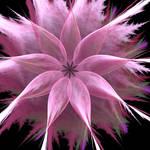 pink flower by lmarm