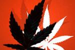 Cannabis Leaf Brushes