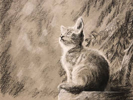 Pretty Kitty by akarudsan