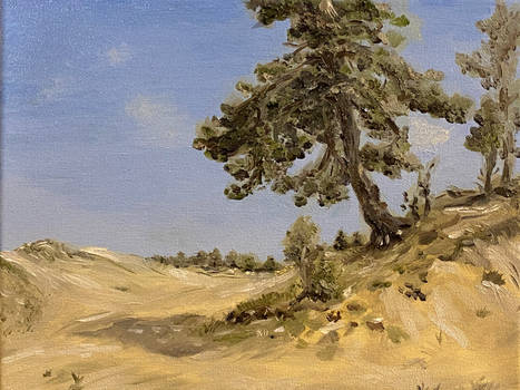 Pine on sand study