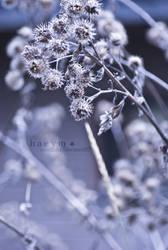 01282_201012 by hemicchi