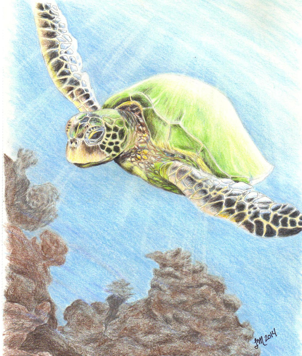 Turtle by lettym