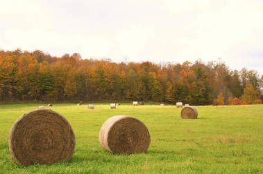 Fall fields by Of-Heliotropes