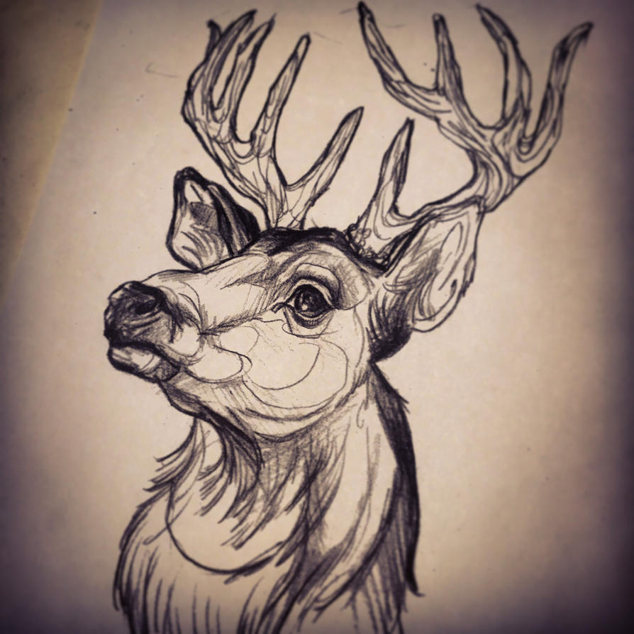 deer head drawing tumblr - photo #41