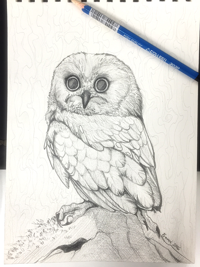 Owl Sketch by francis-john