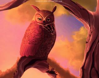An Owl by francis-john