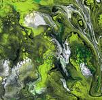 algae storm