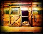 Foal In A Stall