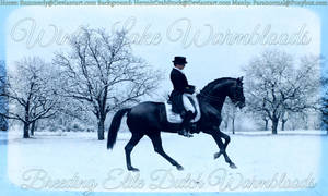 Winter Lake Warmbloods