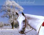 Winter Wonderland [25/12/2016