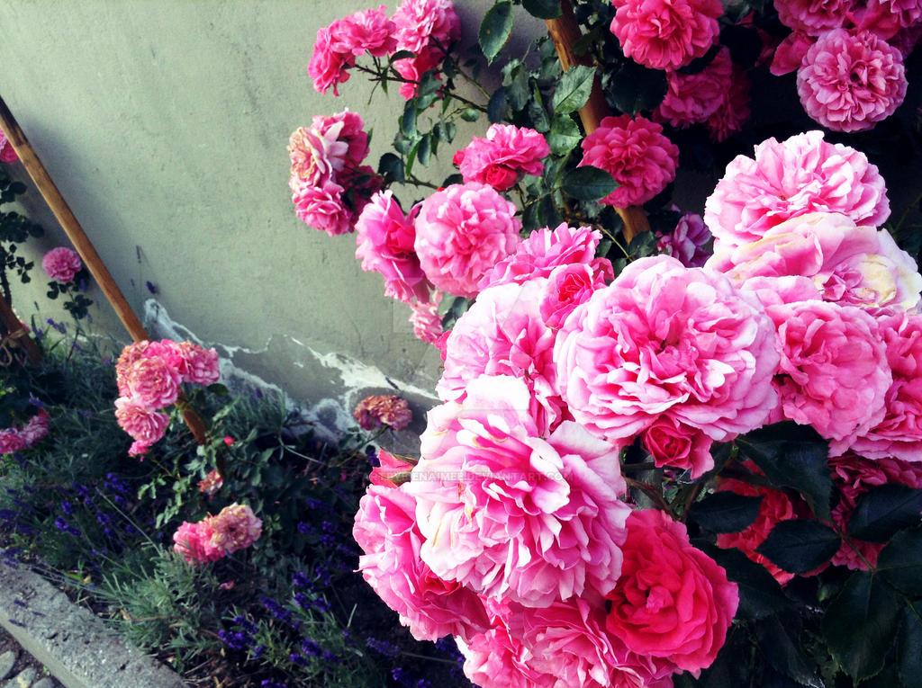 A Burst of Beauty by ARTbyBienAimee