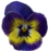 Small pansy decoration (Transparent)