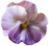 Small pansy decoration 2 (Transparent)