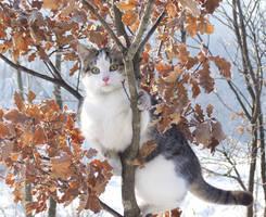 Cat by Taniquelasse