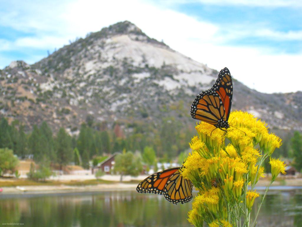 Monarch Butterflies 2 by xxx-TeddyBear-xxx