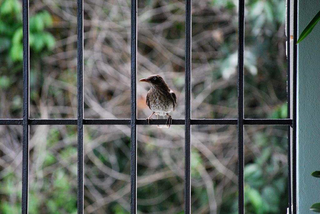 Bird by osoroco