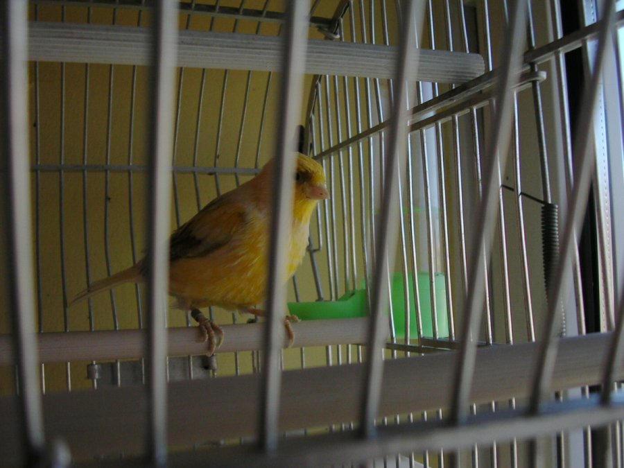 Caged Bird by osoroco