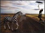 Zebra on the road