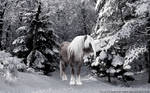 Horse in the snow WP