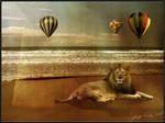 Lion at the beach
