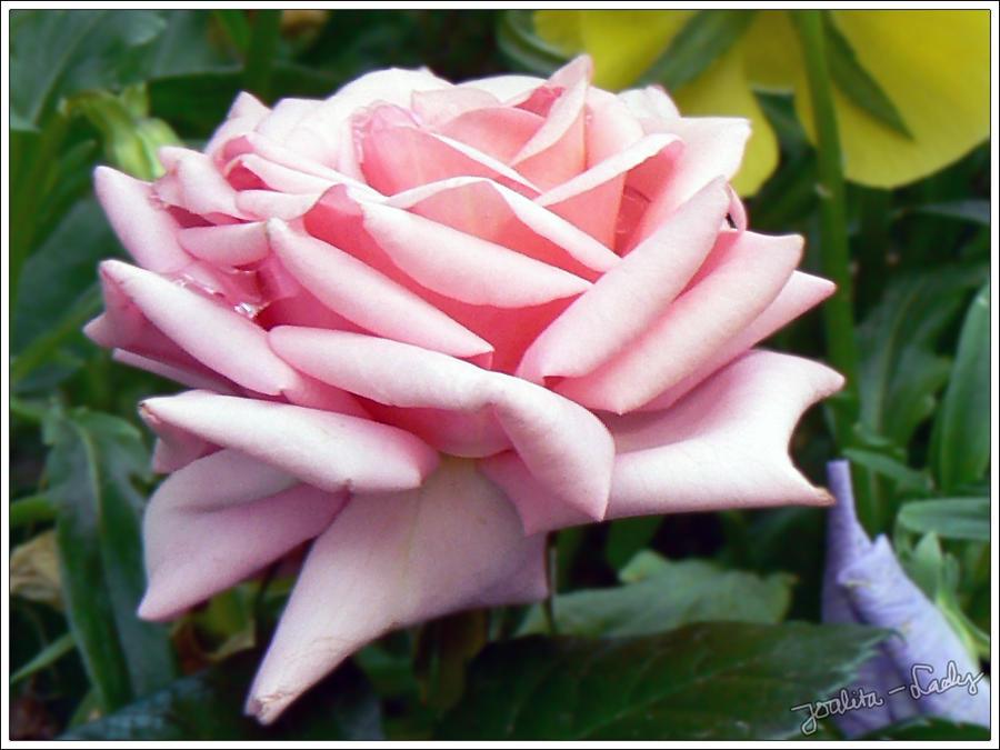 Flower in June no. 2