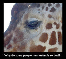 Why do some people treat animals so bad?