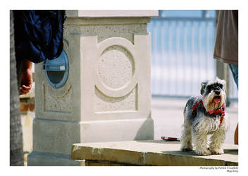 Doggie on a Ledge - weezin by streetshots