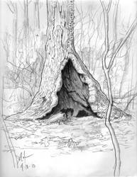 Hollow Tree by Duncan-Eagleson