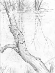 Lichen Branch by Duncan-Eagleson