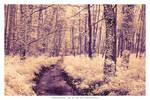 The enchanted woods of Heviz
