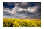 The fields of Topona'r - I