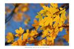 Autumn caleidoscope - II