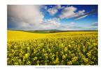 Rainbow Country - II