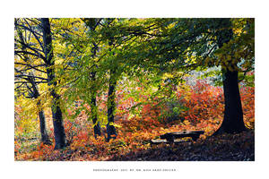 Autumn in To'kaj - I by DimensionSeven