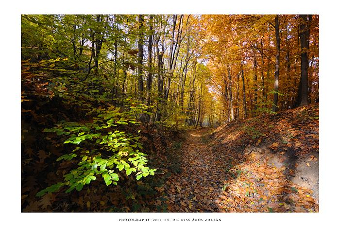 Autumn in To'kaj - II by DimensionSeven
