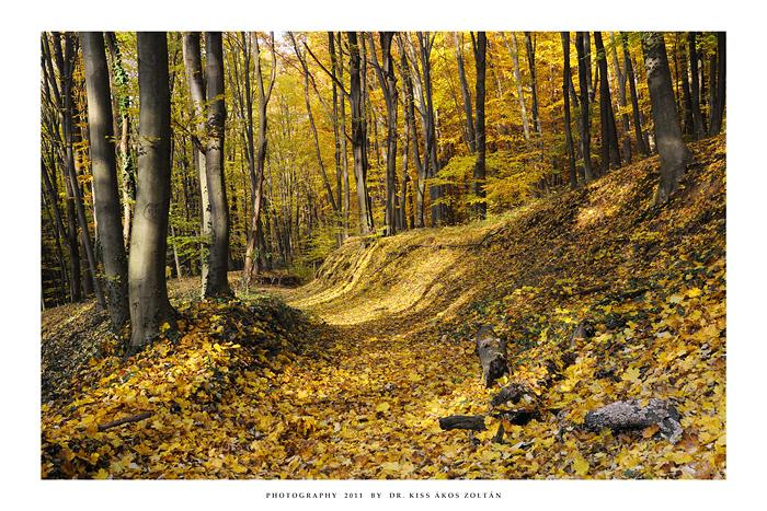 Autumn in To'kaj - VI by DimensionSeven