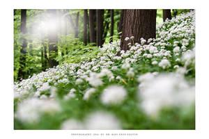 Springtime carpet - II
