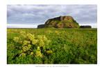 Iceland - XXIII