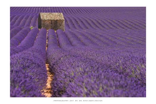 Provence - V