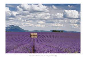 Provence - VI