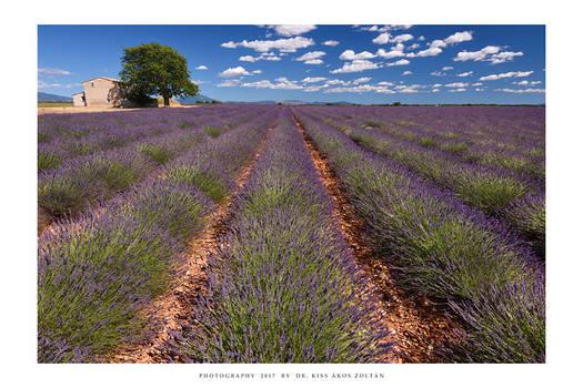 Provence - XVIII