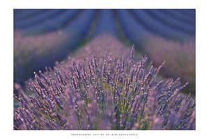 Provence - XIX
