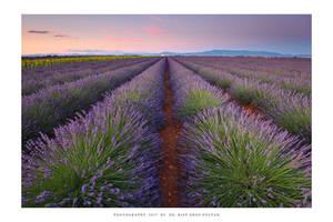 Provence - XX