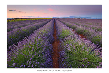 Provence - XX by DimensionSeven