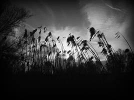 Dancing In The Wind. by sasha-sunshine0